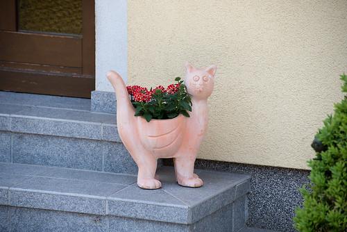 Domestic cat ©  Andrey