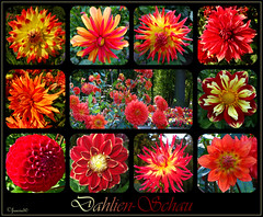 Dahlien... (freesie50) Tags: collage garten dahlien dahlienterrasse