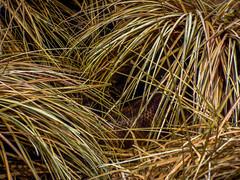 Hidey Hole (J.T. Lindroos) Tags: lumix zoo snake louisville louisvillezoo panasoniclumix fz70 dmcfz70
