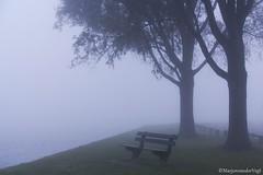take a seat (LadyLove1967) Tags: mist water licht bomen vogels spinnenwebben donker koeien bankje zicht warmond leegte geenzicht