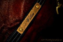 Wilco - Licol (PhotOw'graphie) Tags: horse cheval dressage quitation nom licol