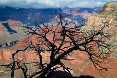 Grand Canyon (cormack13) Tags: arizona grandcanyon grandcanyonnationalpark