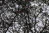 As Leaves Fall (Gabriel FW Koch) Tags: autumn tree fall nature leaves silhouette canon outside outdoors eos shadows dof cloudy dusk pov telephoto limbs twigs