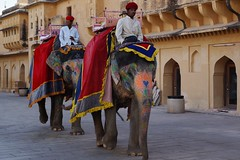 Elephants at The Amber Palace, Amer, Jaipur, Rajasthan, India - DSC03660 (JULIAN MASON) Tags: india elephant jaipur rajasthan amberfort amerfort amberpalace 2015 rajamansingh amerpalace julianmason sleepingbeautyofrajasthan