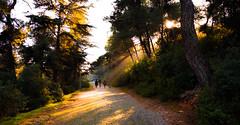 Big Island.. / Büyükada.. / Istanbul.. (adnangler) Tags: autumn light shadow sky sun sunlight tree forest walking island big nikon flickr peace istanbul paving bigisland marmara huzur lightbeam sonbahar yürüyüş nikond800 flickrturkey nikonturkey parkeyol