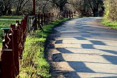 Fence, path, shadows (mikkelfrimerrasmussen) Tags: fence copenhagen shadows path fold sti gravel kbenhavn grus amager amagerflled hegn skygger hestefold
