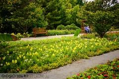 PLW_5590 (Laszlo Perger) Tags: wien vienna sterreich austria blumengarten hirschstetten flowergarden