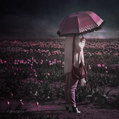 In the Tulip Field (lensletter) Tags: woman lady umbrella silk tulip tulipfield pink mauve flowers field spring rain mist kreativepeoplegroup lensletter