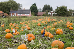 Some are a bit better at hiding than others (Adnams) Tags: hauntinglygood ghostship beer wangford suffolk adnams halloween costumes pumpkins pumpkin wangfordfarmshop