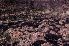 ckuchem-6780 (christine_kuchem) Tags: boden erde frhjahr schaden schwarzwild spuren wald waldboden wildnis wildschweine wildtier winter aufgewhlt whlen