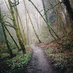 constants in life (manyfires) Tags: hasselblad hasselblad500cm mediumformat square film analog forest woods trees hiking hike path trail pnw pacificnorthwest oregon misty mist fog moody moss verdant lush lakeoswego tryoncreek landscape