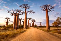 Madagascar (jpmiss) Tags: africa 6d longexposure baobabs canon madagascar jpmiss afrique toliara mg