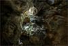 161016 703 grotta gigante (# andrea mometti   photographia) Tags: grotta gigante trieste sgonico caverna stalagtiti stalagmiti umidità mometti