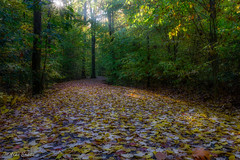 Dreamland (melike erkan) Tags: trees light magical coltonpoint pa pennsylvania path leaves autumn