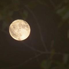 Supermoon from the porch. (slammerking) Tags: supermoon moon moonrise hunters tree fullmoon night nightsky nikon kansas
