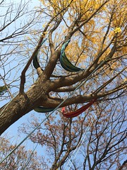 2016.11.19   EVENT   (PLAYSEESAW) Tags: treeclimbing seesaw outdoorxcrew outdoor innovationpark