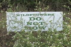 IMG_0255 (hammonton_garden) Tags: 2016 communitygarden fall hammonton southjersey nj gardenstate