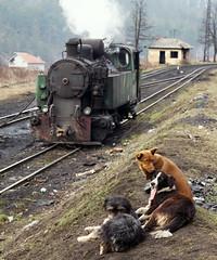 At the Stabling Point (Kingmoor Klickr) Tags: bosniaherzegovina rmu banovici oskova washery dogs industrial railway class25 tank locomotive