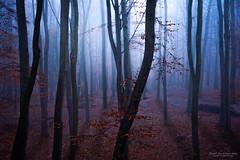 A kind of magic (Festblick) Tags: nature landscape forest natur landschaft wald fog nebel licht light trees mist rays hamburg