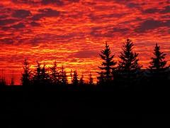 A brilliant start to the day (peggyhr) Tags: peggyhr sunrise silhouettes trees clouds sky red yellow black mauve bluebirdestates alberta canada