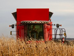 Explored......thank you!     Published in the Western Producer - November 24, 2016 (Jeannette Greaves) Tags: jspubpic 2016 westernproducer combine field corn red harvest late rothwell manitoba explore