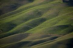 Waves. (Antonio Cinotti ) Tags: landscape paesaggio toscana tuscany italy italia siena hills colline campagnatoscana cretesenesi asciano nikond7100 nikon d7100 rollinghills nikon18300 tuscancountryside