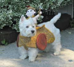 10/12B ~ Riley wishes Everyone a Happy Halloween (ellenc995) Tags: riley westie westhighlandwhiteterrier 12monthsfordogs16 halloween october costume coth alittlebeauty thesunshinegroup coth5 sunrays5 supershot abigfave rubyphotographer challengeclub pet100 pet500 pet1000 100commentgroup