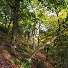 Padley Trees (RD400e) Tags: canon eos 5d mk3 zeiss distagon t f2821 ze bwpolariser gitzo padley gorge peakdistrictnationalpark peakdistrict trees woods walking outdoors autumn