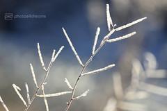 sunday morning 04.12.2016 -p4d- 087 (photos4dreams) Tags: sundaymorning04122016p4d winter photos4dreams p4d photos4dreamz photo rauhreif frosty rime hoarfrost walk sunny sonnenschein sonne