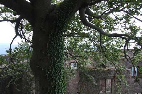 Within Hohenbaden Castle Ruins, 16.09.2011.