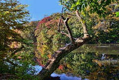 First Breath Of Fall (biglannie) Tags: fall autumn leaves trees scenic pond lake reflectioninwater beautiful colorful changeofseason sceniclandscape postcard
