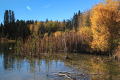 IMG_9759 (ctmarie3) Tags: banffnationalpark vermilionlakes thirdvermilionlake fallcolor leaves