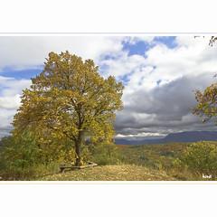 Florian (horstmall) Tags: hügel hill colle florian albvorland albtrauf ermstal linde linden tillia tilleuil schwäbischealb swabianalps jurasouabe wald forest forèt woodland landscape landschaft horstmall