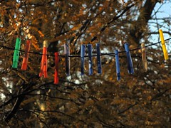 clothes pegs on my washing line, in the winter sun, 2016-11-28, 09-23-55 (tributory) Tags: london eastlondon hackney e9 urban trees sumlight winter weather plastic red green purple yellow blue pink leaves dof depthoffocus brown russet gold sky lowangle home domestic nature washing pegs clothes