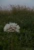 Rugiada (mac89cam) Tags: mac89 autumn autunno goccie fiore macro photografy fotografia flower drops rugiada dew