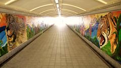 11 - Begin To Understand (4oClock) Tags: singapore sg50 2015 nikon asia city urban republic subway art lion tiger mural vanishingpoint colour color symbols singaporeriver downtowncore civicdistrict yellow orange green cats