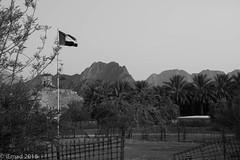 Entrance to Hatta Heritage Village.... (EHA73) Tags: aposummicronm1250asph leica leicamm typ246 blackandwhite bw travel hattaheritagevillage hatta dubai uae flag pole trees palms palmtrees fence