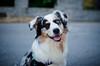 Amber (Fr3dd3rico) Tags: dog cane puppy fur eyes furry fluffy occhi dolce pup cana blink straydog pelo cucciolo cagna pelame cagnina cucciola occhiolino cagnetta eterocromia