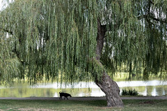 Dog Day Afternoon at Trout Lake (roaming-the-planet) Tags: troutlake dogdayafternoon vancouversummer