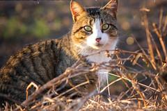 Pequeo mooo (Cristian Fotografia) Tags: animal retrato gato bossi
