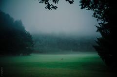 ...indeed morning (kmgfoto) Tags: wild sun salzburg nature sunrise dark photography amazing mood lovenature naturelovers