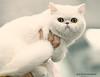 IMG_7455a_c (JANY FEDERICO GIOVANNINETTI) Tags: hairy cats cat hair eyes funny soft sweet expressions occhi international felini gatto gatti divertenti pelosi pelo dolci pedigree internazionale sguardi espressioni razza soffice soffici