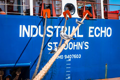{ Industrial Echo } (CParthe) Tags: blue seagulls bird boat ship texas gulls houston rope containership shipping supplychain freight houstonshipchannel intermarine industrialecho