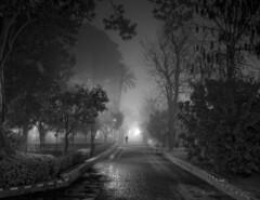 Un hombre en la niebla. A man in the fog. (Javier Martinez de la Ossa) Tags: bw españa mist blancoynegro fog blackwhite calle sevilla andalucía bn niebla empedrado barriodesantacruz jardinesdemurillo bestcapturesaoi elitegalleryaoi javiermartinezdelaossa