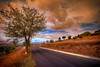 The curves (* landscape photographer *) Tags: road sunset italy tree nature colors clouds nikon europe flickr strada tramonto nuvole sigma valle natura valley sa sasi nikkor curve albero 1020 colori settembre paesaggi salvo pianura lucania 2015 respiro creazione dagri freschezza landscapephotographer montalbanojonico salvyitaly