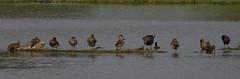 Assortment-4861 (rawshorty) Tags: birds australia canberra act rawshorty