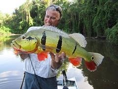 Amazonia 2012 (54)