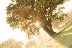 Hatfield_Forest-41 (Eldorino) Tags: park uk morning autumn trees nature forest sunrise landscape countryside nikon britain centre jour hatfield bishops stortford essex hertfordshire stanstead hatfieldforest