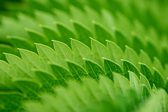 (only lines) Tags: plant green leaves