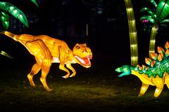 Cretaceous Clash (Jerry Bowley) Tags: calgary zoo dinosaur lanterns rex stegosaurus dinosaurs trex calgaryzoo tyrannosaurus yyc tyrannosaurusrex illuminasia